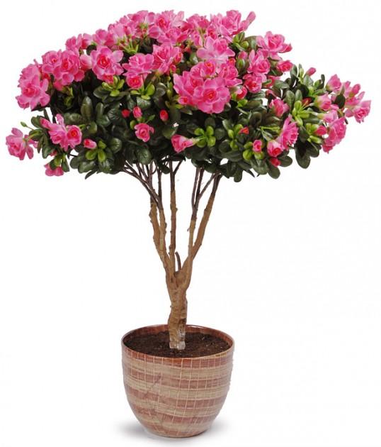 Комнатные растения картинки