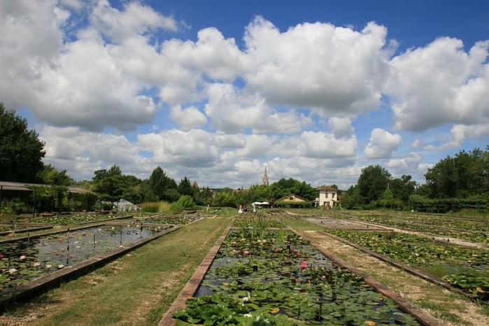 Есть в графском парке тихий пруд..... Там лилии цветут . .Ботанический сад Latour - Marliac. 94253
