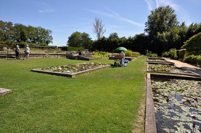 Есть в графском парке тихий пруд..... Там лилии цветут . .Ботанический сад Latour - Marliac. 60748