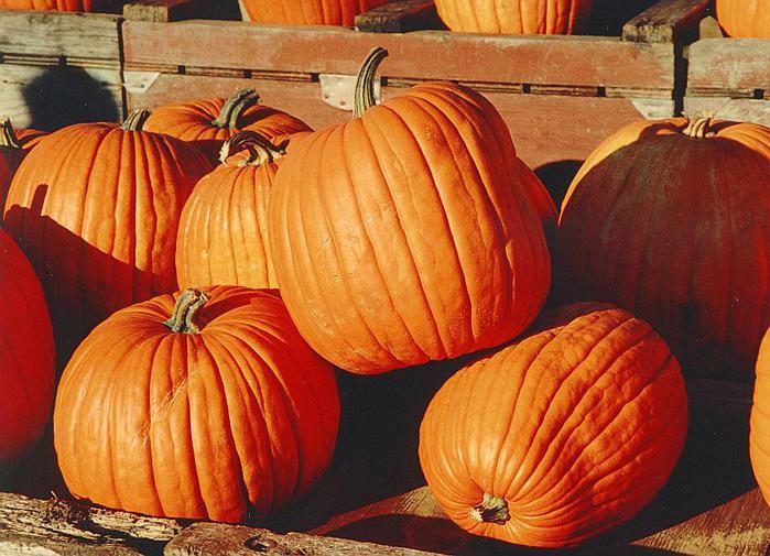 Pumpkins (700x505, 71Kb)