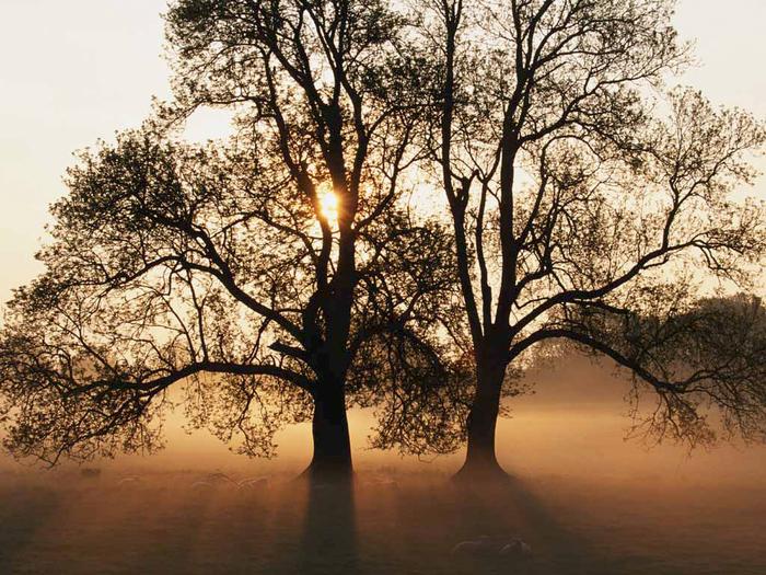 Tree (700x525, 461Kb)