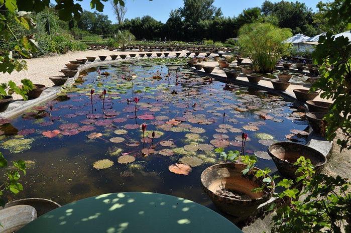 Есть в графском парке тихий пруд..... Там лилии цветут . .Ботанический сад Latour - Marliac. 67357