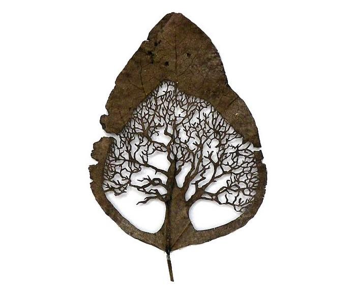 Искусство вырезания листьев от Lorenzo Duran