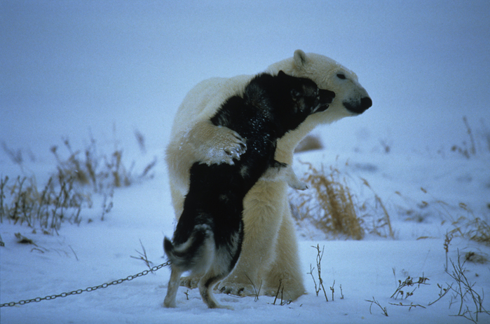 It ' s hard to believe that this polar bear only needed to hug someone!