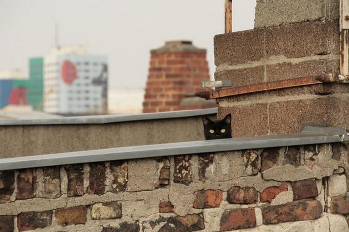 Прикольные фото кошек-невидимок