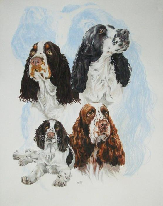 English_Springer_Spaniel_wGhost_19x24WC-CP_2009 (556x700, 46Kb) .