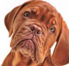 Корм для катрированных животных (139x133, 45Kb)