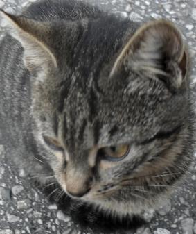 Коту Мичману прооперировали мочевой пузырь (283x337, 218Kb)