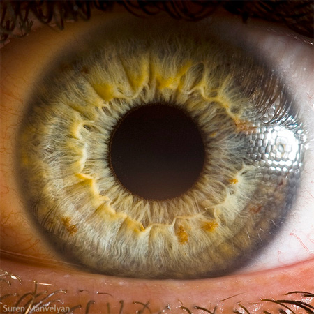 eye10 (450x450, 84Kb)