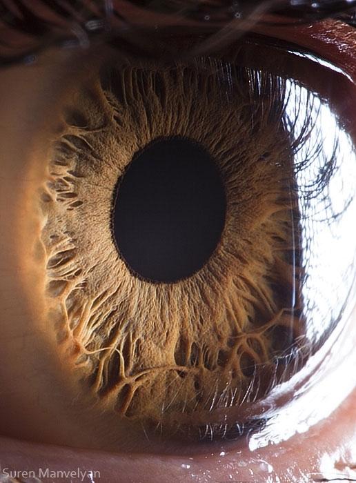 eye11 (516x700, 217Kb)