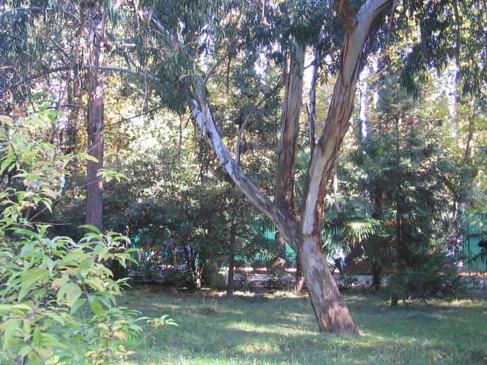 фото осень 2011 29 10 133 (700x525, 226Kb)