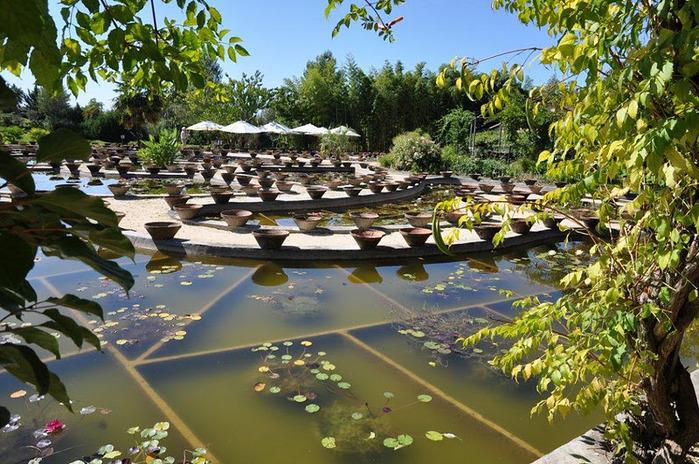 Есть в графском парке тихий пруд..... Там лилии цветут . .Ботанический сад Latour - Marliac. 19459