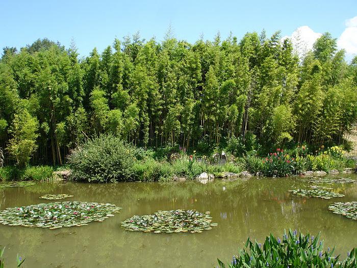 Есть в графском парке тихий пруд..... Там лилии цветут . .Ботанический сад Latour - Marliac. 81459