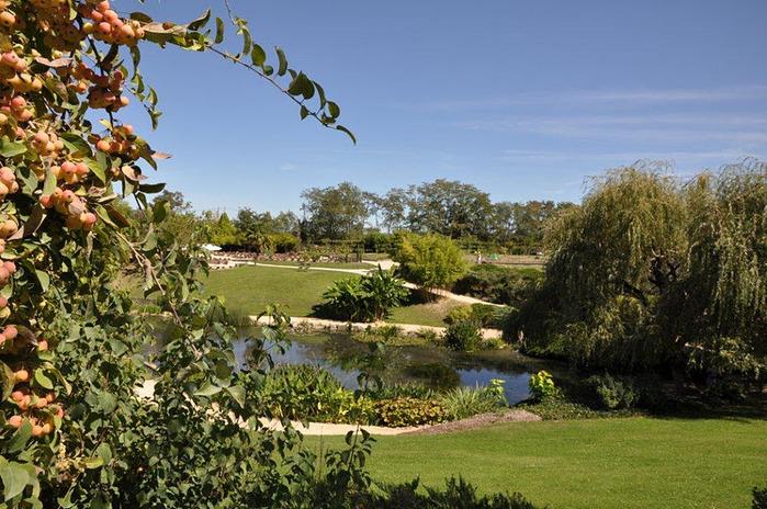 Есть в графском парке тихий пруд..... Там лилии цветут . .Ботанический сад Latour - Marliac. 79997