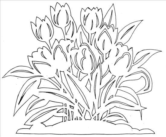 tulipany (550x453, 50Kb)