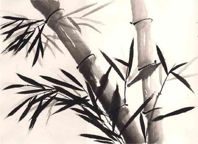 bamboo4 (669x487, 21Kb)