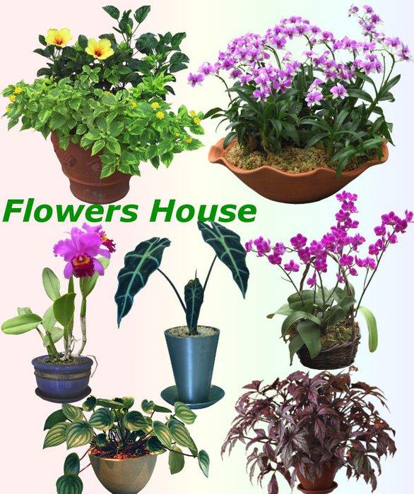 3291761_01Flowers_House (586x700, 112Kb)