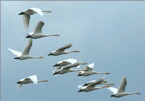 птицы (466x326, 14Kb)