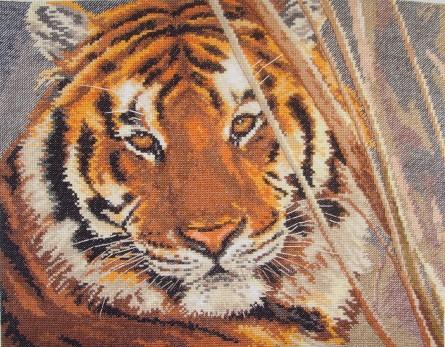 1-08 Тигр(отшитая работа) (445x347, 85Kb)