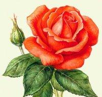 роза (200x191, 11Kb)