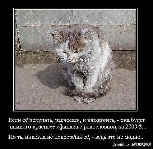 http://img0.liveinternet.ru/images/attach/c/4/79/809/79809532_x_f3737a94.jpg