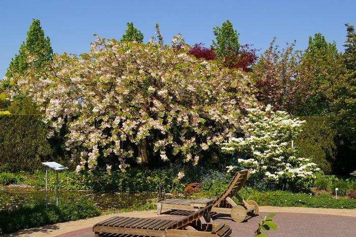 Волшебные сады Аппельтерна 77029