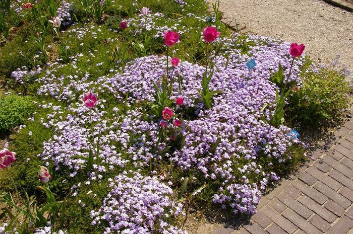 Волшебные сады Аппельтерна 53369