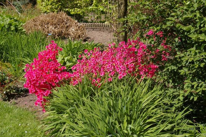 Волшебные сады Аппельтерна 60406