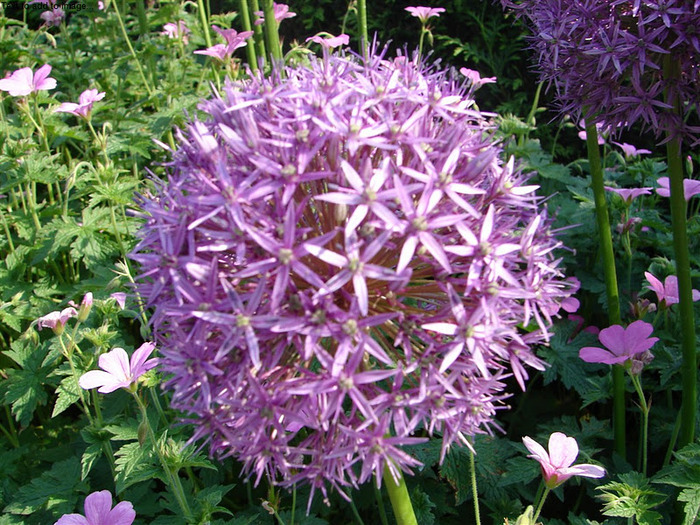 Волшебные сады Аппельтерна 32033