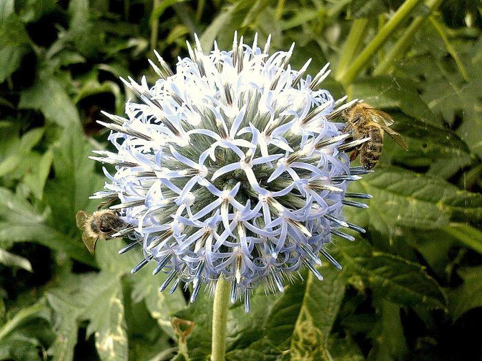 Волшебные сады Аппельтерна 12269