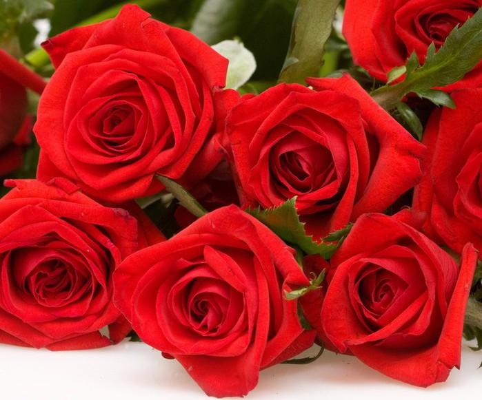1 розы м (700x581, 104Kb)