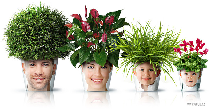 blog-sobre-greenleaf-face-pots1 (700x355, 123Kb)
