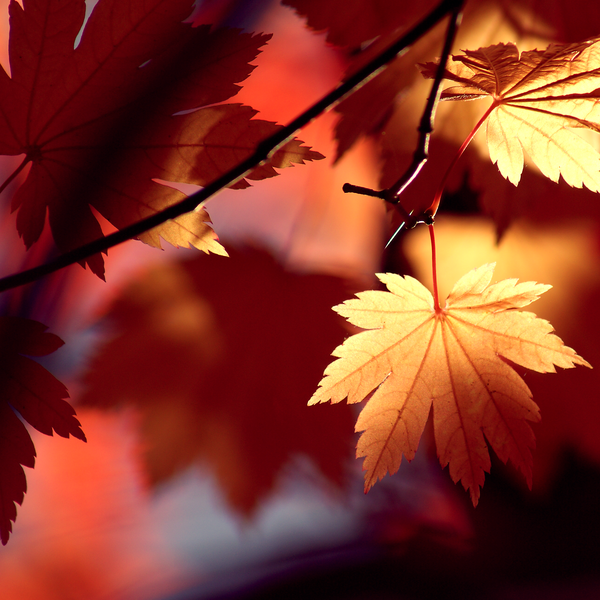 64735763_Autumn_Shadows_by_Jay_Cougar_Prints (600x600, 466Kb)