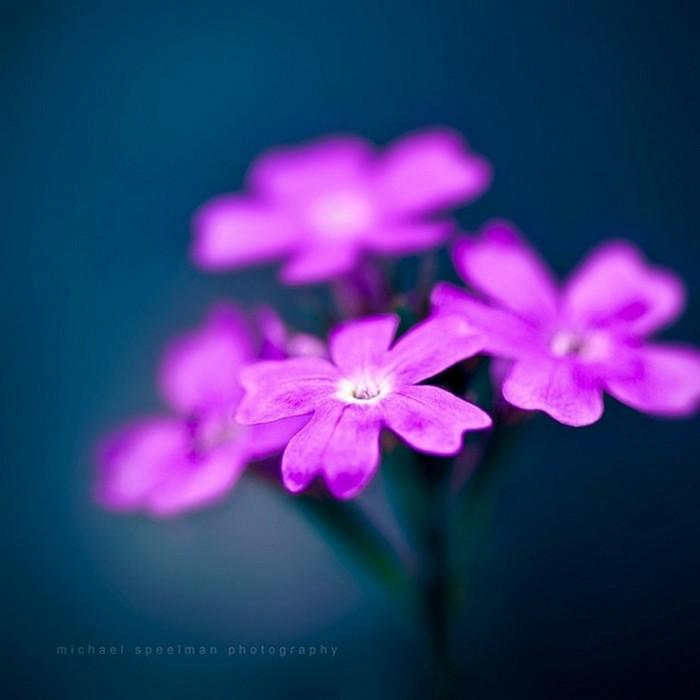 Картинки самые красивые цветы - 537