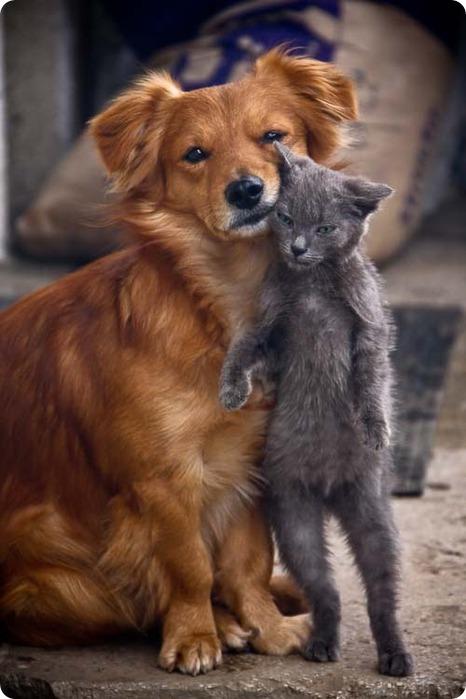 3713712_cat_dog_17_04 (466x700, 75Kb)