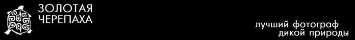 header (700x79, 9Kb)