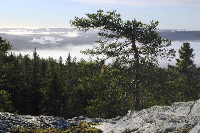 Красоты_Лапландии,_Финляндия (700x466, 75Kb)