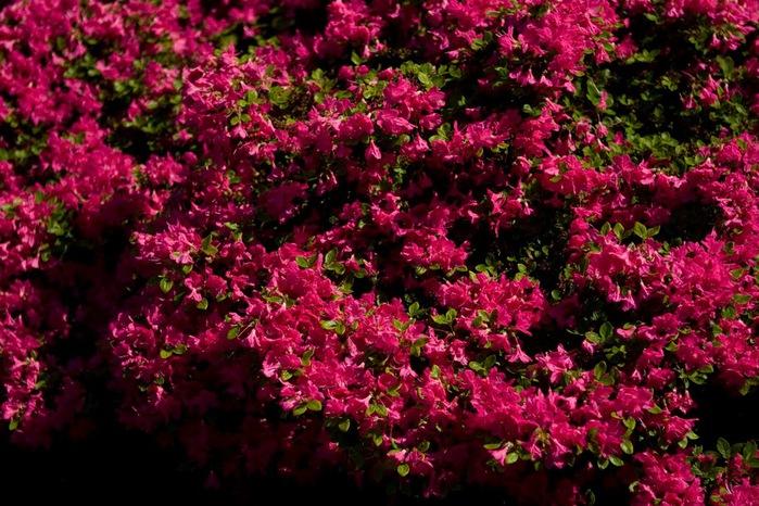 Ботанический сад в Пругонице 48620