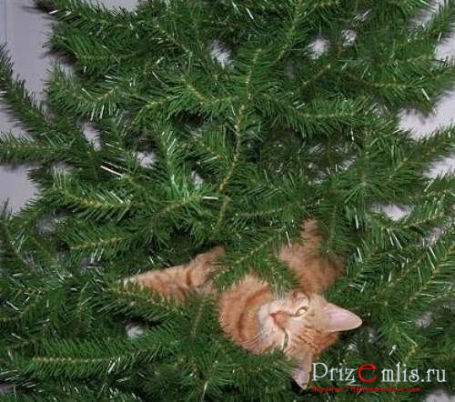 1293727957_cats-in-christmas-trees-14 (500x442, 60Kb)
