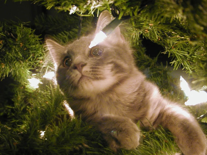 climbing-in-the-christmas-tree (700x525, 95Kb)