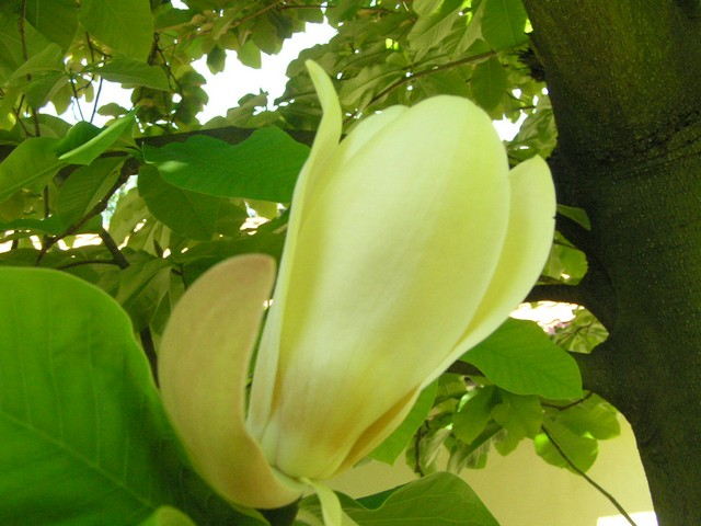 Ботанический сад в Пругонице 76741