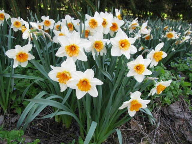 Ботанический сад в Пругонице 45309