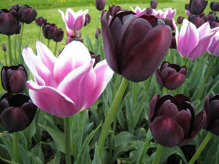 Ботанический сад в Пругонице 22797
