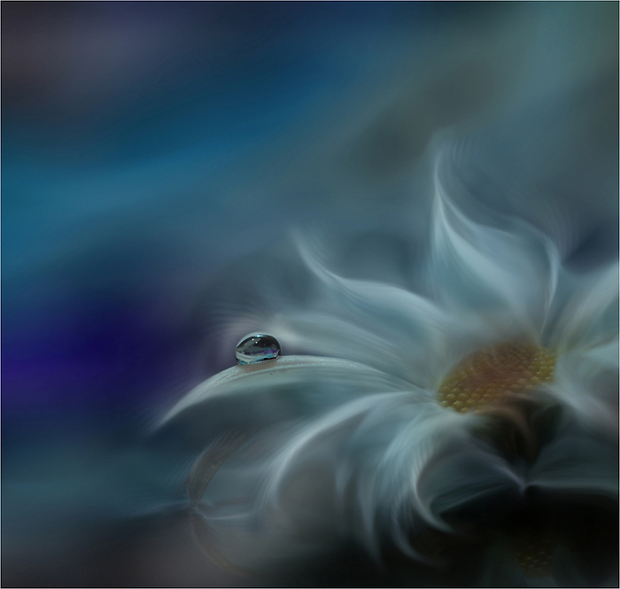цветок на заставку (700x665, 213Kb)