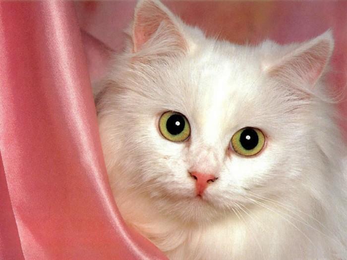 красивые кошки фото/1321613665_koshka (700x525, 83Kb)