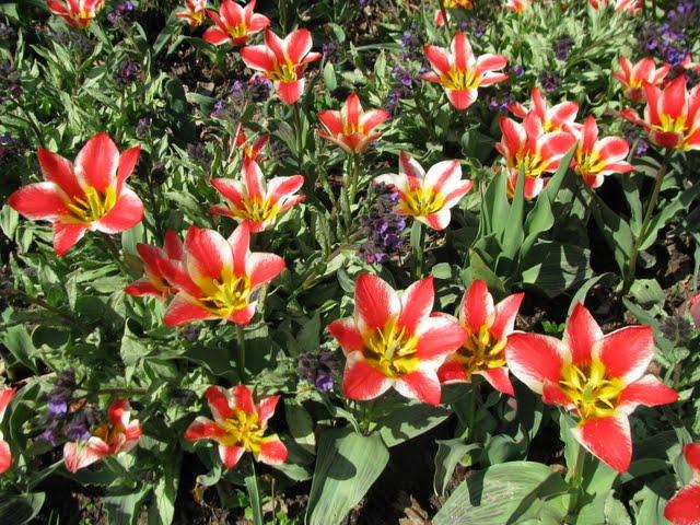 Ботанический сад в Пругонице 76964
