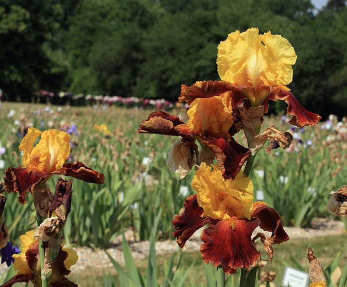 Ботанический сад в Пругонице 59264
