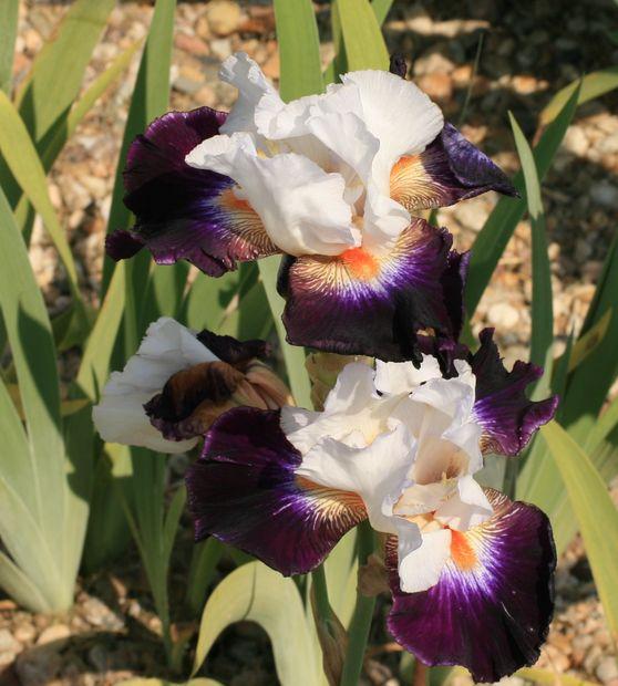 Ботанический сад в Пругонице 34734