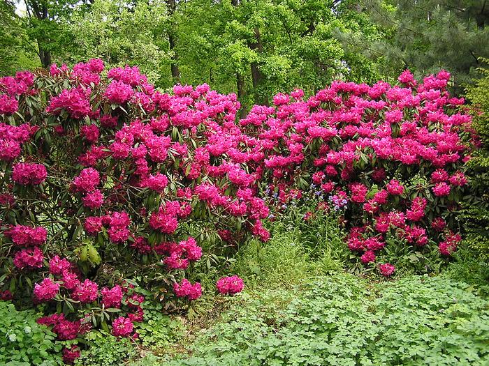 Ботанический сад в Пругонице 30016