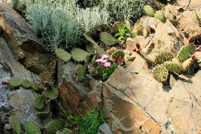 Ботанический сад в Пругонице 21663
